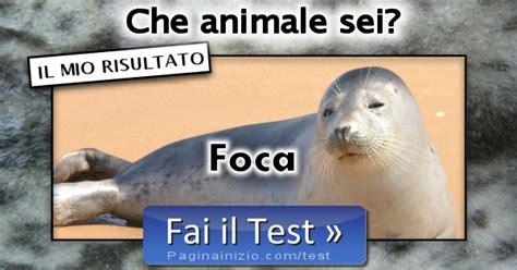 risultato test risultato test animale sei foca