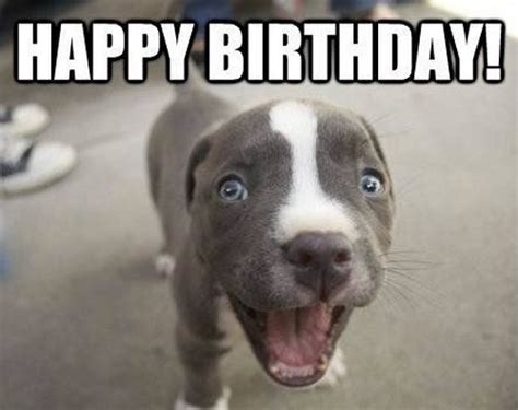 Happy Birthday Meme Dog - happy dog meme 100 images happy birthday memes with
