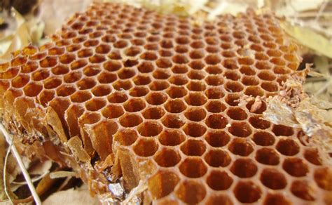 Honey Comb Honeycomb file honeycomb 15 03 2012 jpg
