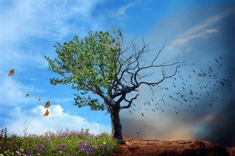 half tree depth psychology