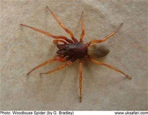 red house spider do electronic pest control products work insecticide