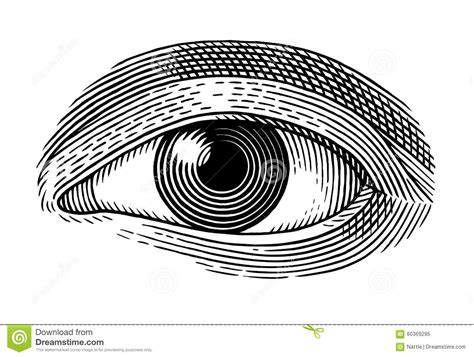 picture illustration human eye stock vector image 60369295