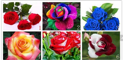imagenes rosas varias 90 sementes rosas ex 243 ticas 9 tipos e cores frete gr 225 tis