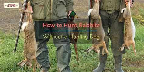 how to a to rabbit hunt how to hunt rabbits without a captain