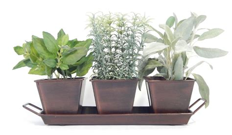 windowsill herb garden kit windowsill garden kit windowsill herb garden kit
