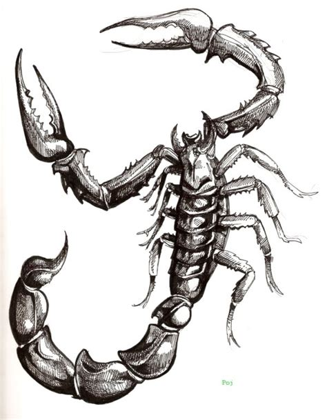 scorpion tattoo tribal tattoos scorpio designs