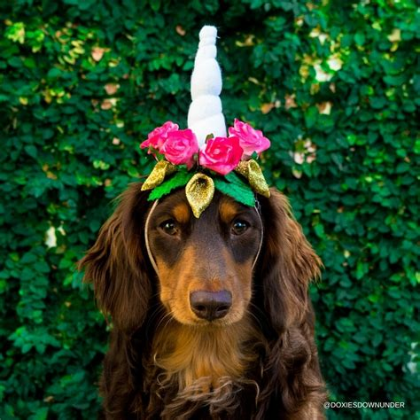 unicorn puppy how to make a unicorn headband for your doxies