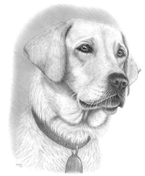 drawings of dogs drawings of dogs pencil drawing