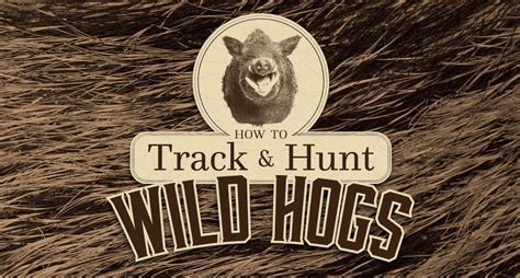 how to a to hunt hogs how to hunt hogs infographics