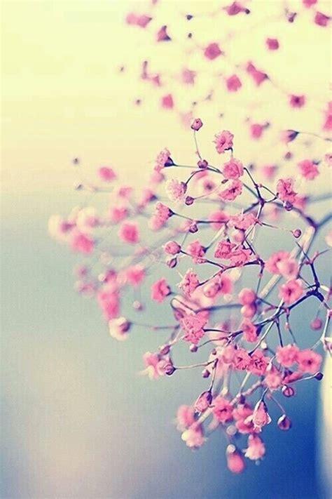 imagenes de flores we heart it tumblr fond d 233 cran beaut 233 printemps fleurs image