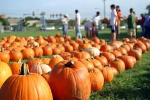 halloween pumpkin patches 7 non scary halloween activities