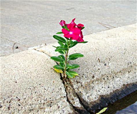 il cemento non è un fiore testo poesie p 1 l angolo della fenice