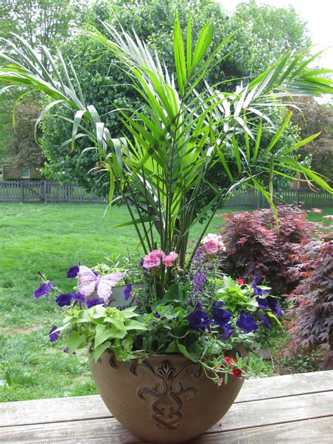 Love The Palm Large Container Garden Container Gardens Potted Plant Garden Ideas