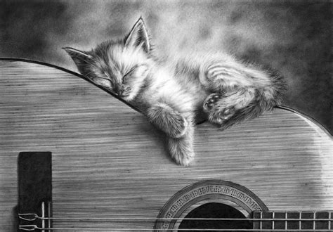 cat guitar wallpaper free high resolution pictures high definition pencil