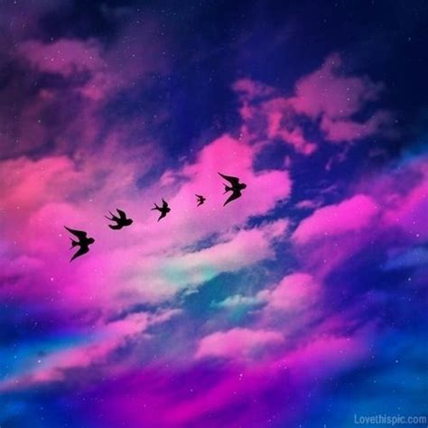flying birds colorful sky clouds birds pretty