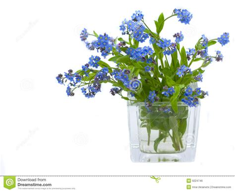 Blus Free To Be Me forget me nots stock photo image of outdoors flower