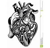 Coeur Humain Illustration De Vecteur  Image 61806363