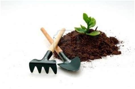 coltivare fiori in serra coltivare piante botanica