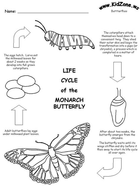 free printable cycle of the monarch butterfly