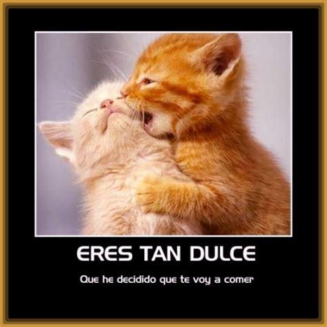 imagenes con frases bonitas de gatitos imagenes de amor con frases de gatos archivos gatitos