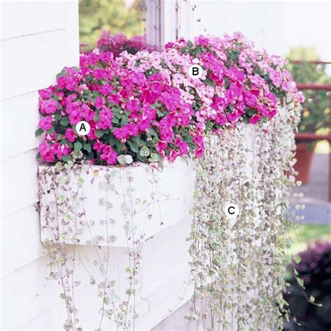 window box ideas for shade easy recipes for window boxes in shade