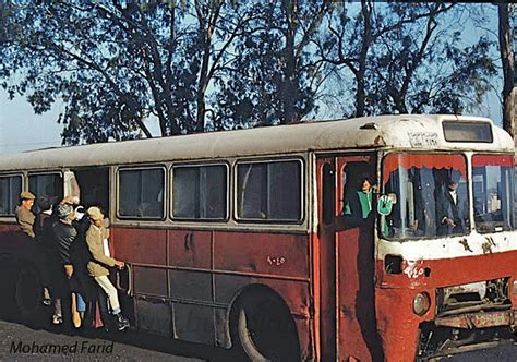 Buses in Egypt-Cairo-Ikarus 556