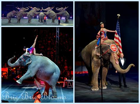 Circus Elephant Rage Family At The Circus That Is Built To Amaze Brie Brie Blooms