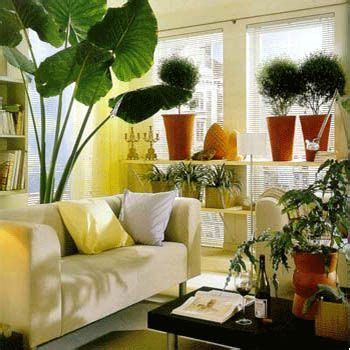 indoor plants decor  drawing room fashion central