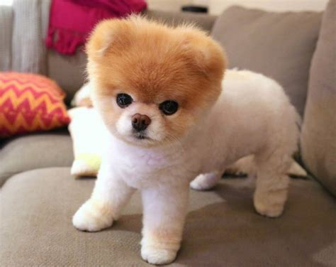 cutest breeds cutest breeds by ranking breeds puppies best and cutest breeds