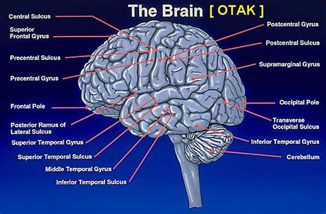 cara membuat otak anak cerdas tips supaya agar otak menjadi cerdas dan pintar jasa