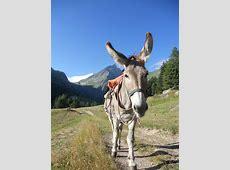 Rando-rencontre autour de l'âne en montagne - Maurienne ... L Actualite