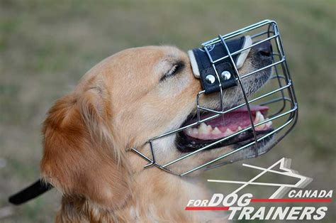 golden retriever muzzle buy adjustable felt padded wire basket muzzle canada
