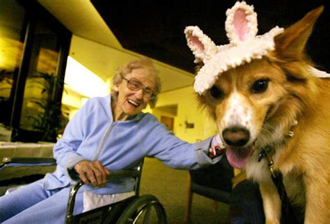 canine and feline geriatric oncology honoring the human animal bond books pets can improve your mood and health country feed store