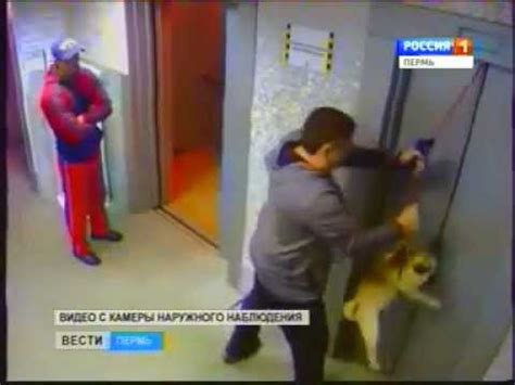 pug saves family from russian pug saved from a horrible elevator mighty pugs