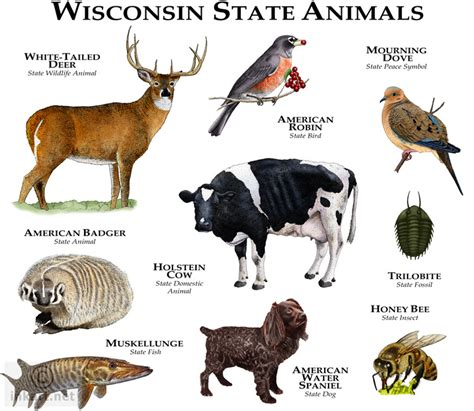 wisconsin state animals fine art illustration of the