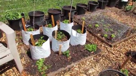 my community garden plot episode 4 planted tomatoes