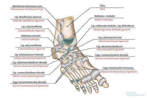 dolore piede laterale interno dolore al piede quali sono le cause e come si cura