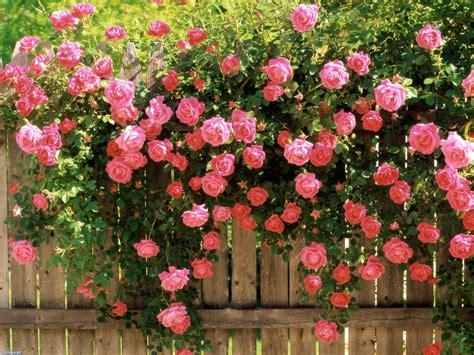 imagenes de jardines de rosas de colores jard 237 n de rosas hd fondoswiki com