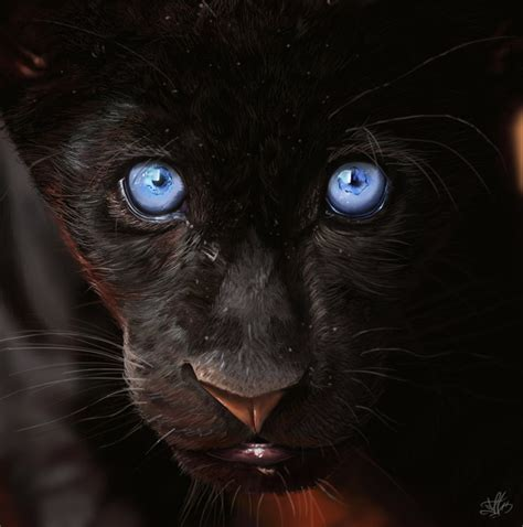 black panther by carlosmatallanadiaz on deviantart