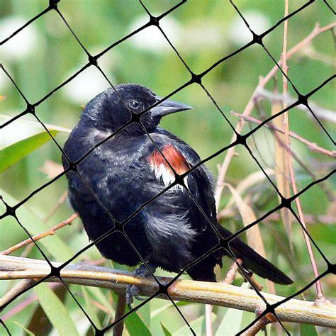standard bird netting  feet   feet lightweight bird