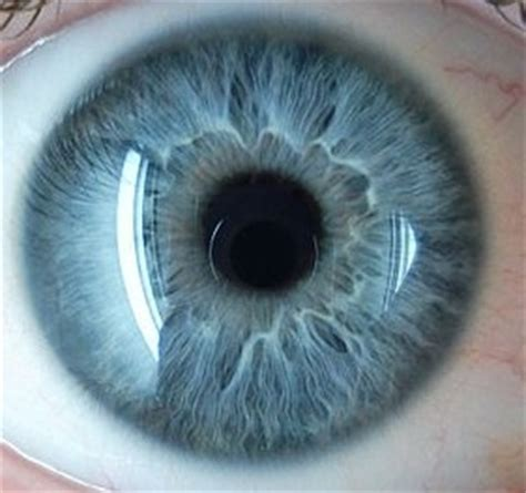 stiletto pattern in blue eyes 17 best images about iris patterns iridology on