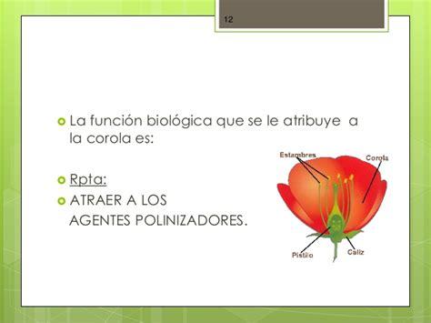 pflanzen le biologie der pflanzen