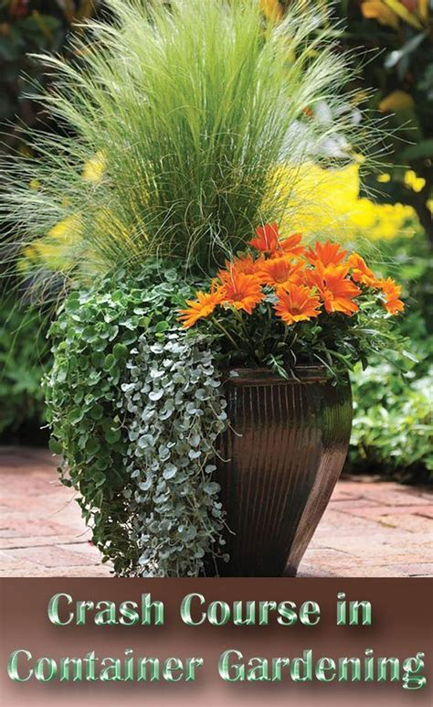 container flower gardening ideas 25 best ideas about outdoor planters on