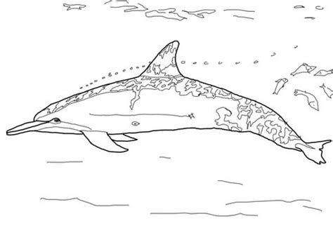 free coloring pages of dolphin pattern spinner dolphin coloring page free printable coloring pages