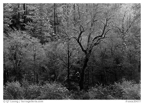 Bsd 140 All Color 1 black and white picture photo bare trees with