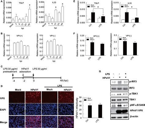 frontiers stromal cell induction of frontiers lipopolysaccharide attenuates induction of