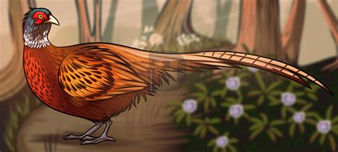 how to a pheasant how to draw a pheasant step by step drawing guide by darkonator drawinghub