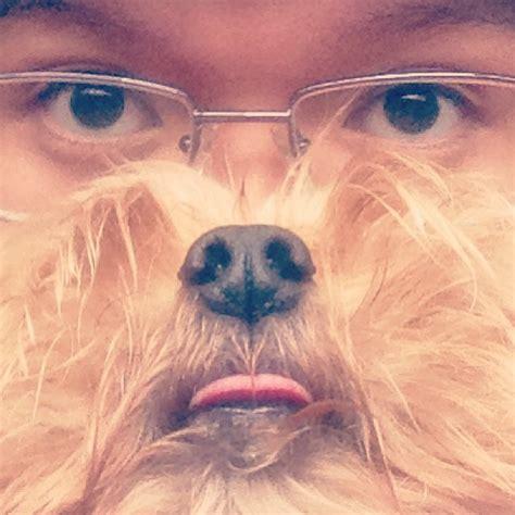 Cat Beard Meme - dog beards the canine equivalent of the cat beards