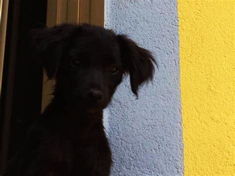 X2 Piccola Piccoli 1 animali domestici cercano casa splendidi cuccioli di in regalo e gattini neri e tigrati da