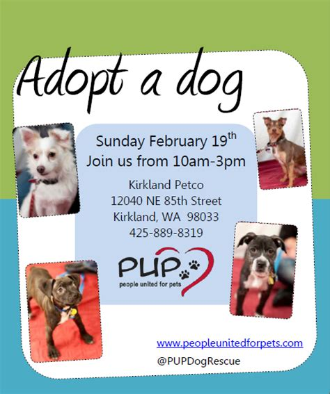 Pup Dog Rescue Flyers Portfolio Michelle Fears Pet Adoption Flyer Template